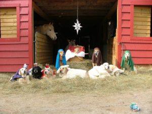 Lab Nativity