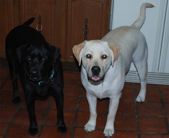 """ZEUS"" (with his sweetheart Ebony~pictured left of him) Lexi X Axel Loved by Delene and Mark and Family"