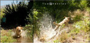 Phoenix romping in the stream June 2011