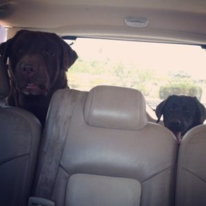 Tug and baby Pirelli riding in the car June 2015